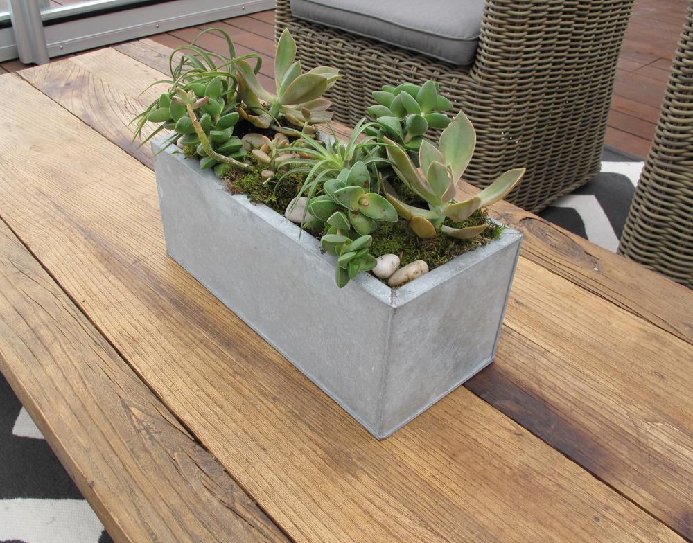 succulent zinc.jpg