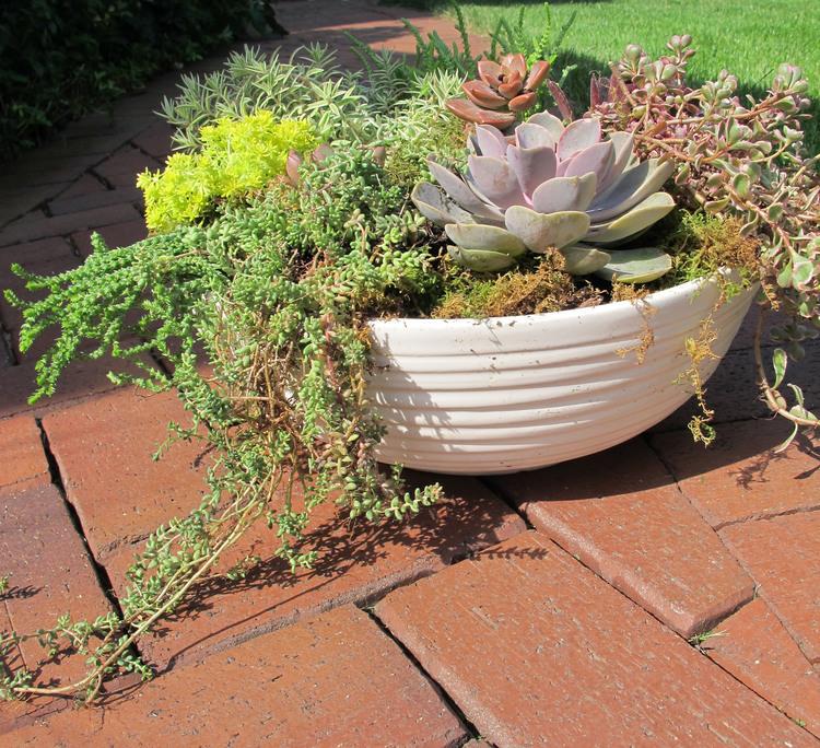 plant+bowl.jpg