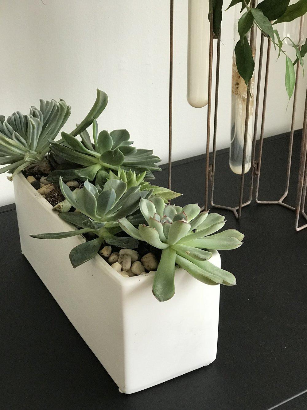 Annie-Plant-1.jpg
