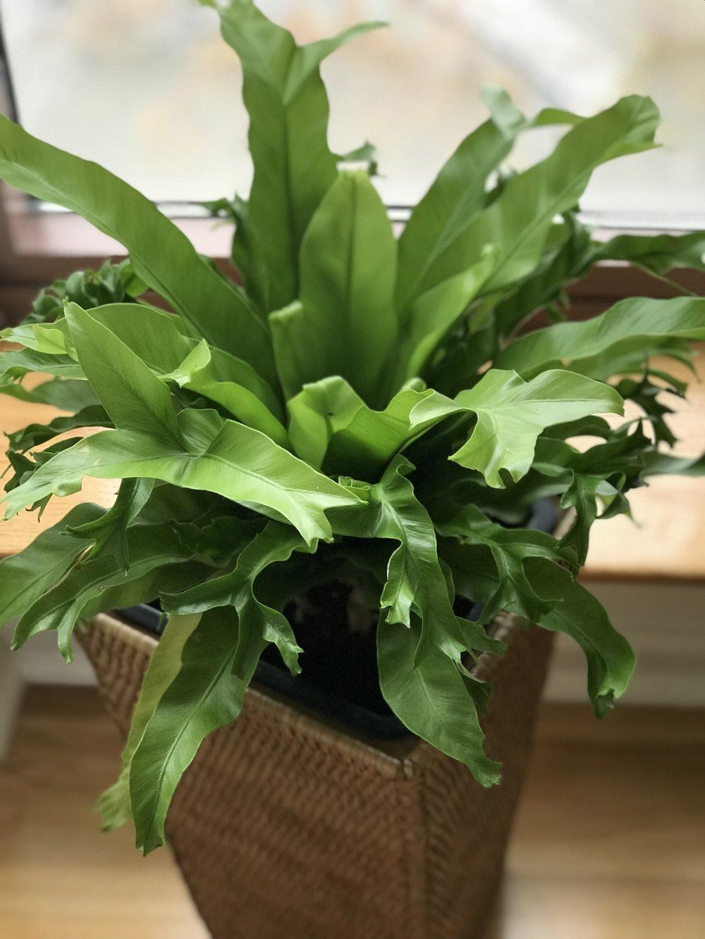 Annie-Plant-3.JPG