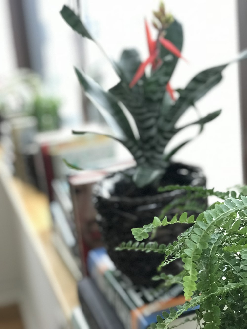 Annie-Plant-8.JPG