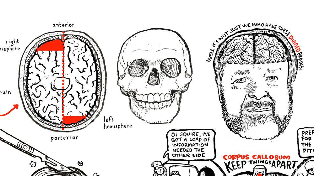 RSA-iain-mcgilchrist-brain-cognitive-2.jpg