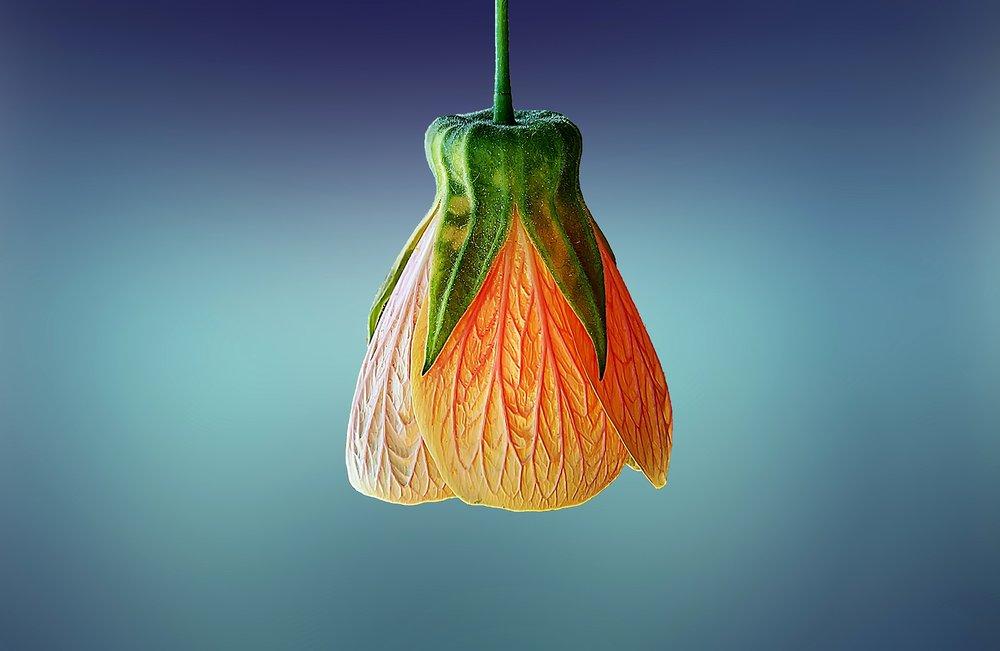 orange-flower-blue-bg.jpg