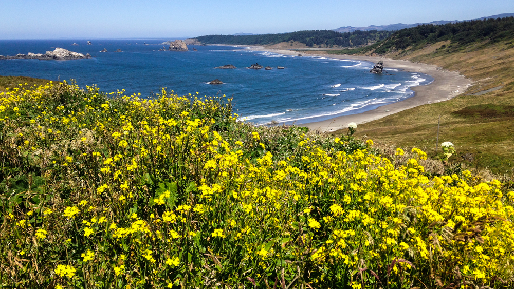Looking toward Blacklock Point from Cape Blanco. Photo: Kew.