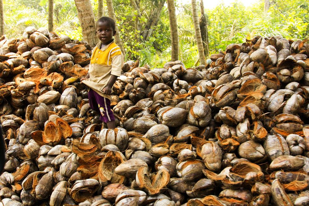 _Côte d'Ivoire_Kew_131.CR2 copy.jpg