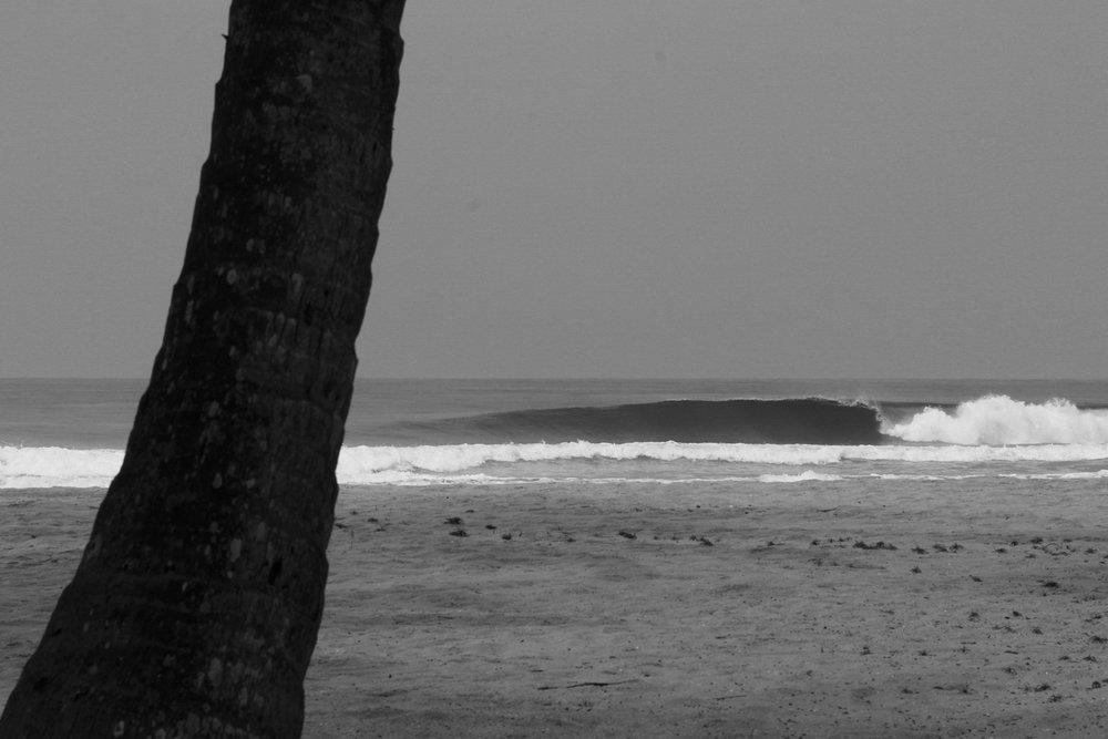 _Côte d'Ivoire_Kew_194.CR2 copy.jpg