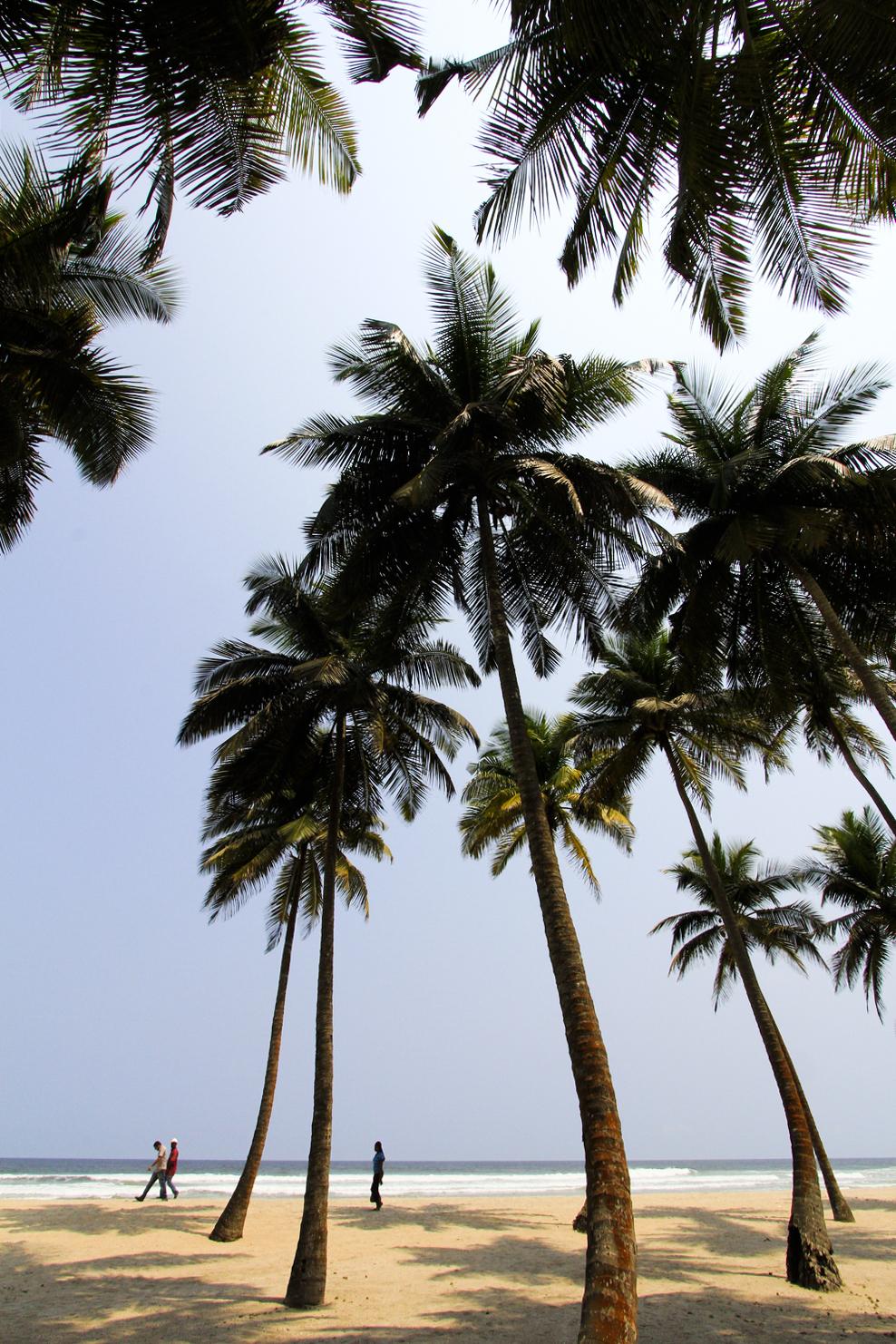 _Côte d'Ivoire_Kew_250.CR2 copy.jpg