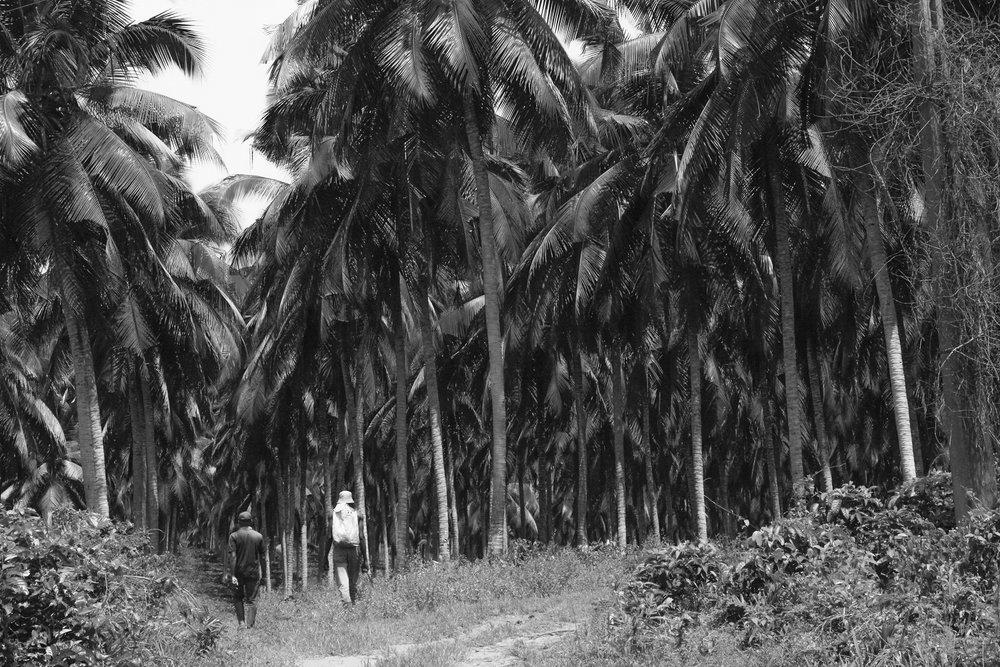 _Côte d'Ivoire_Kew_687.CR2 copy-2.jpg