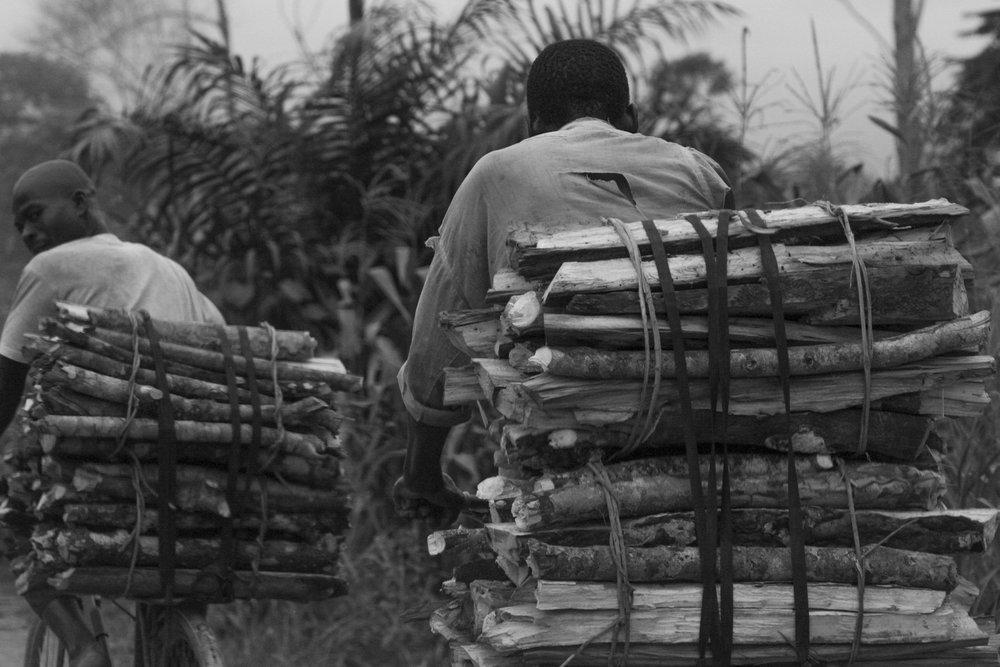 _Côte d'Ivoire_Kew_1217.CR2 copy.jpg