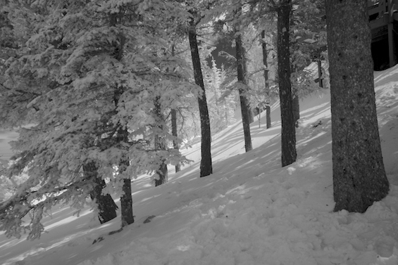 Trees and Snow in Infrared ©Connie Bransilver
