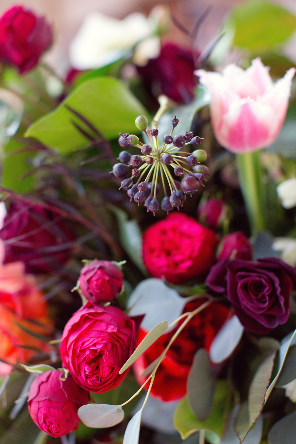 Italian Valentine | Floral Close Up