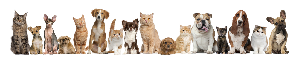 stock-photo-group-of-cats-and-dogs-in-front-of-white-background-91233320.jpg