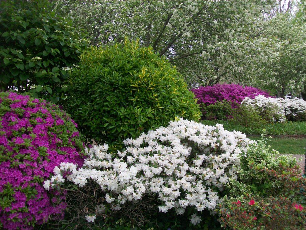 Spring April 2012 4.JPG