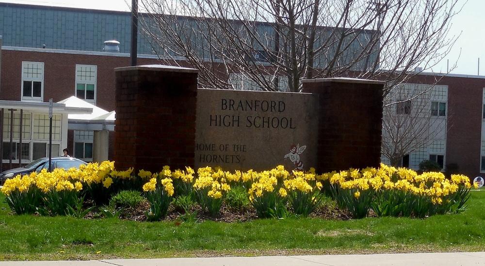 Branford HS daffodils cr.jpg