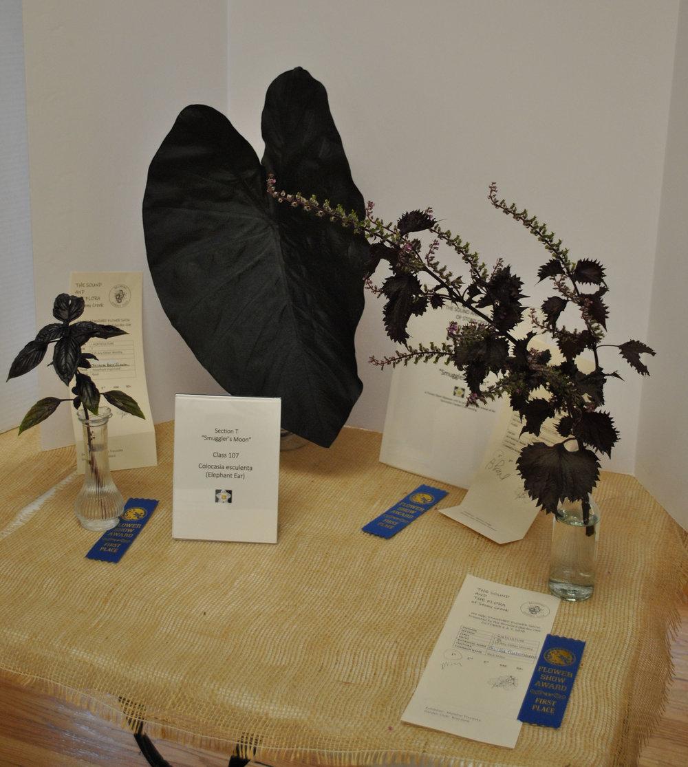 McColl/Raucci Award