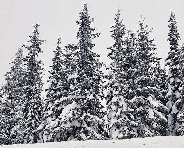 I love how the snow and clouds makes it look like everything is in black and white. . . . . . . {#canada #britishcolumbia #vacation #skiing #getoutstayout #vsco #vscofilm #vscogram #vscocam #bestoftheday #bestofvsco #potd #agameoftones #photooftheday #picoftheday #shotzdelight #thebest_capture #natureporn #landscapelovers #earthoutdoors #neverstopexploring #mothernature #outdoorlife #thegreatoutdoors #instadaily #igdaily #samsung #mountainlife #snow #trees }