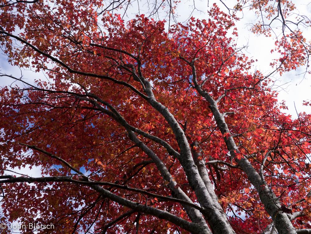 fall leaves desktop-1