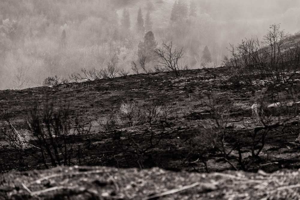 Conservation: A burned hillside after a wildfire near Twisp, Washington