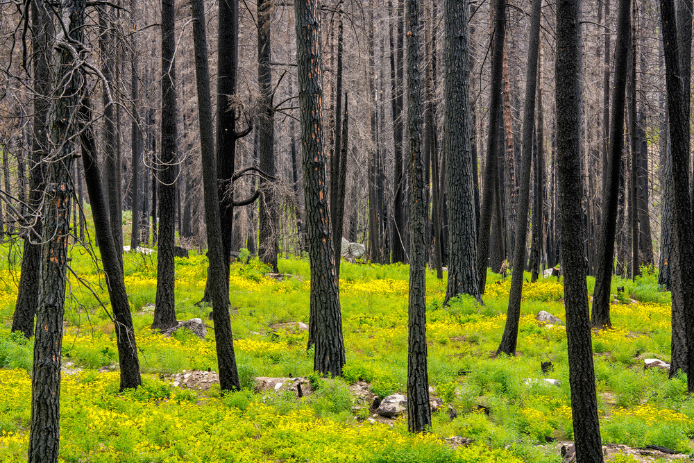 Conservation: The Methow Valley recovers from two years of devestating record breaking wildfires, Washington