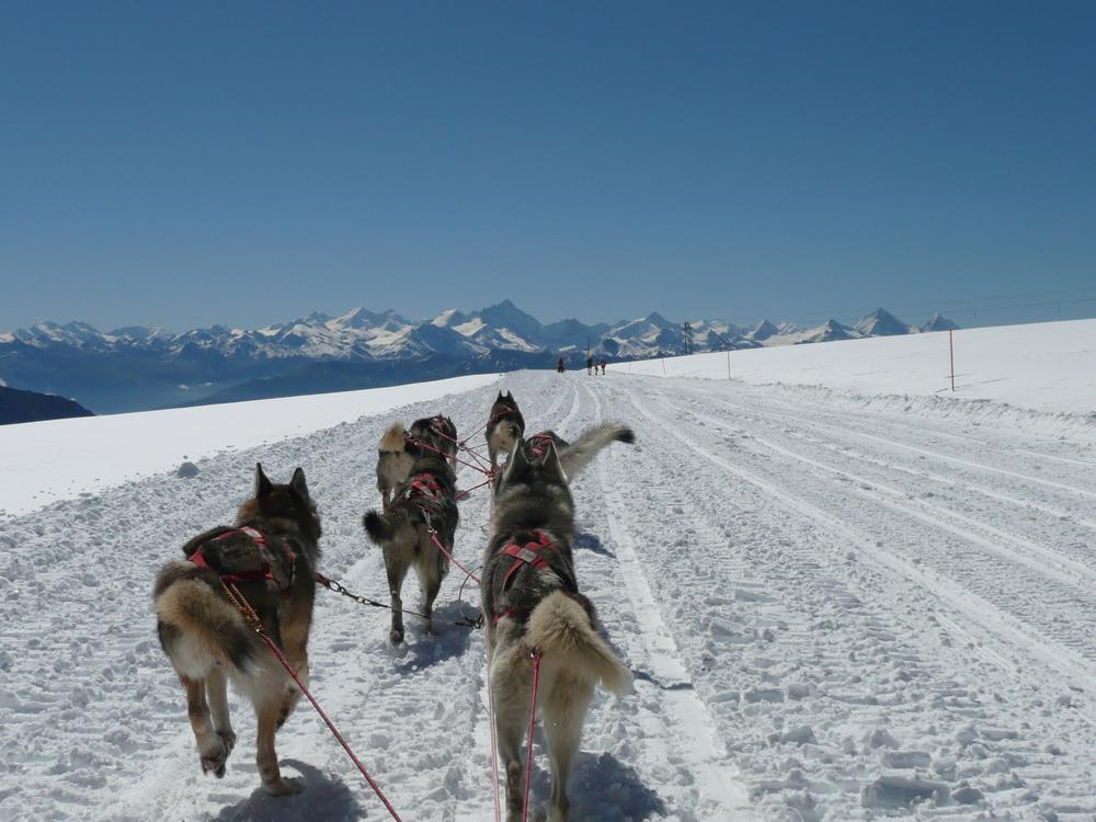 Husky ride in Gstaad (© Gstaad Saanenland Tourismus)