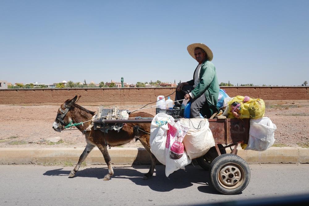 Marrakech cart & donkley