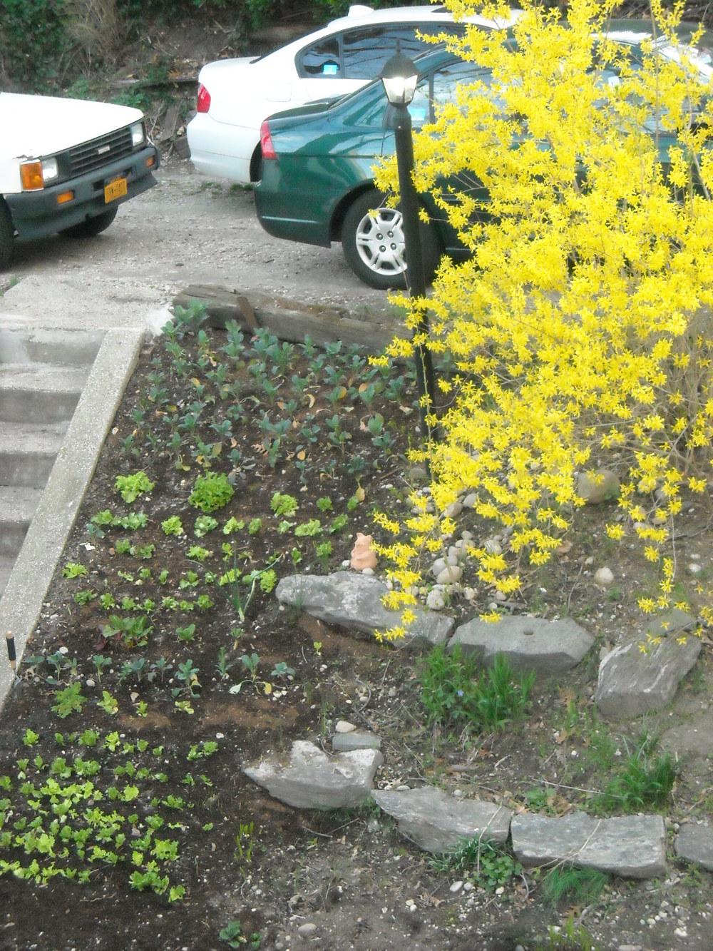 spring 2012 084.jpg