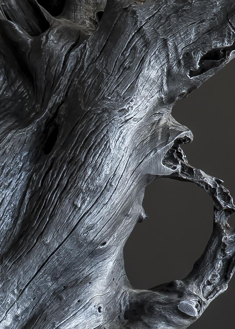 VidereLicet_SmokedRamiform_detail.jpg