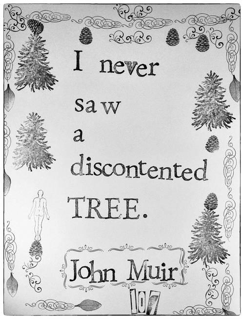 """I never saw a discontented tree."" - John Muir"