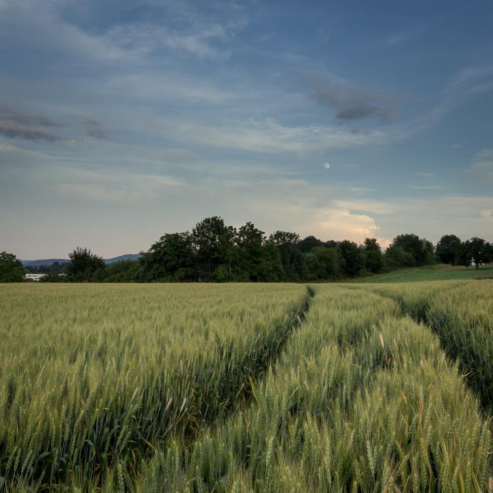 wheatmoon_ben_kepka.jpg
