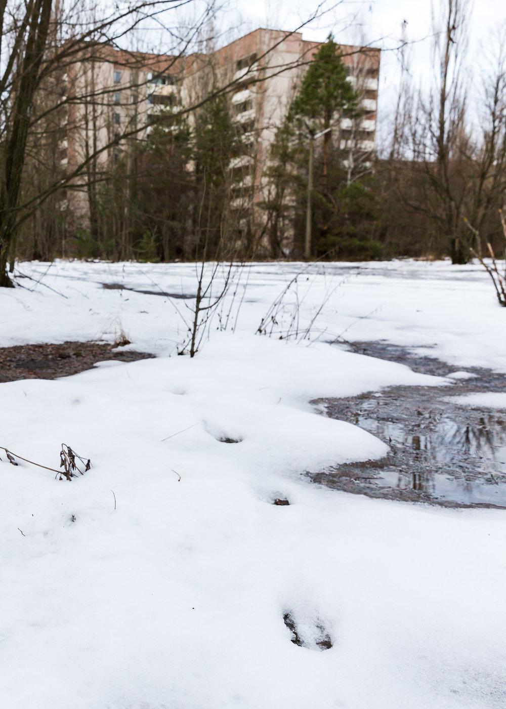 2017_01_02_ben_kepka_cultured_kiwi_Ukraine_Chernobyl-19.jpg