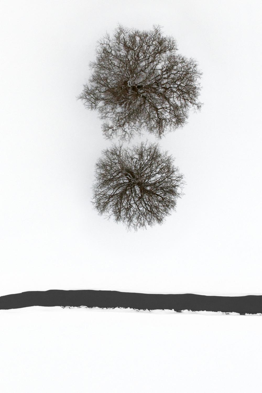 Calligraphy 2010.jpg