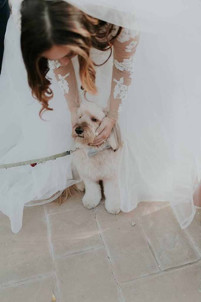 Alicia+lucia+photography+-+albuquerque+wedding+photographer+-+santa+fe+wedding+photography+-+new+mexico+wedding+photographer+-+albuquerque+wedding+-+santa+fe+wedding+-+dogs+in+weddings+-+wedding+dogs+-+real+weddings_0008.jpg