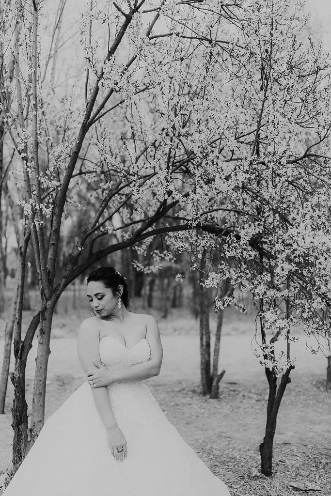 Alicia+lucia+photography+-+albuquerque+wedding+photographer+-+santa+fe+wedding+photography+-+new+mexico+wedding+photographer+-+albuquerque+wedding+-+albuquerque+winter+wedding_0058.jpg