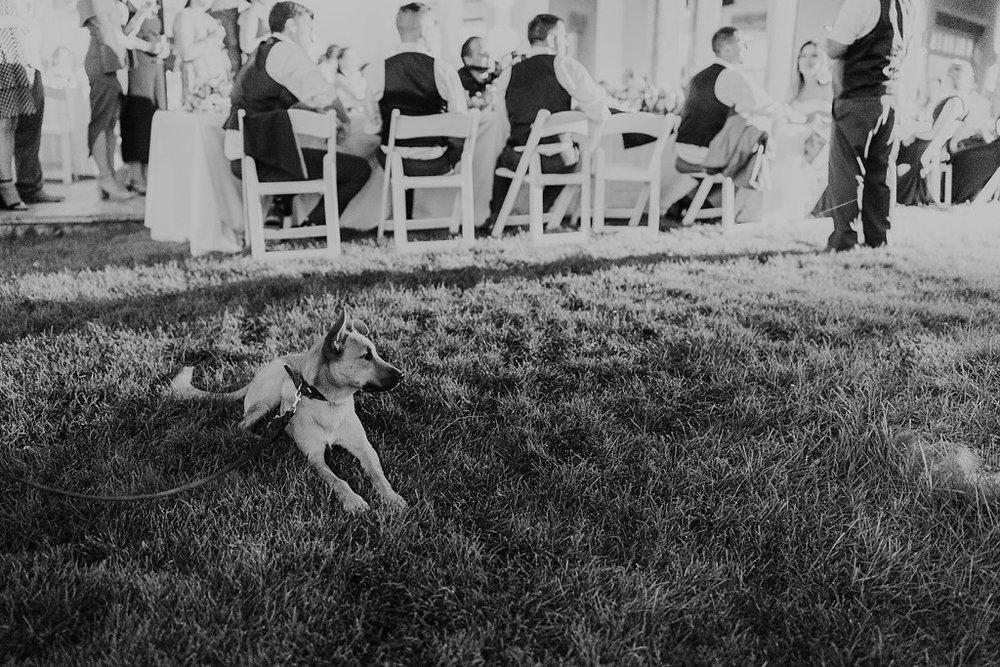 Alicia+lucia+photography+-+albuquerque+wedding+photographer+-+santa+fe+wedding+photography+-+new+mexico+wedding+photographer+-+albuquerque+wedding+-+paako+ridge+golf+club+-+paako+ridge+golf+club+wedding_0102.jpg