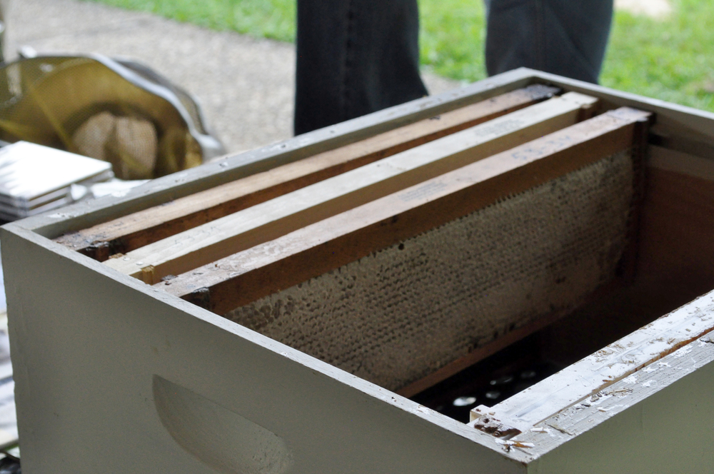 These (bee-free demonstration) frames allowed attendees to see up-close what the inside of a hive looks like.
