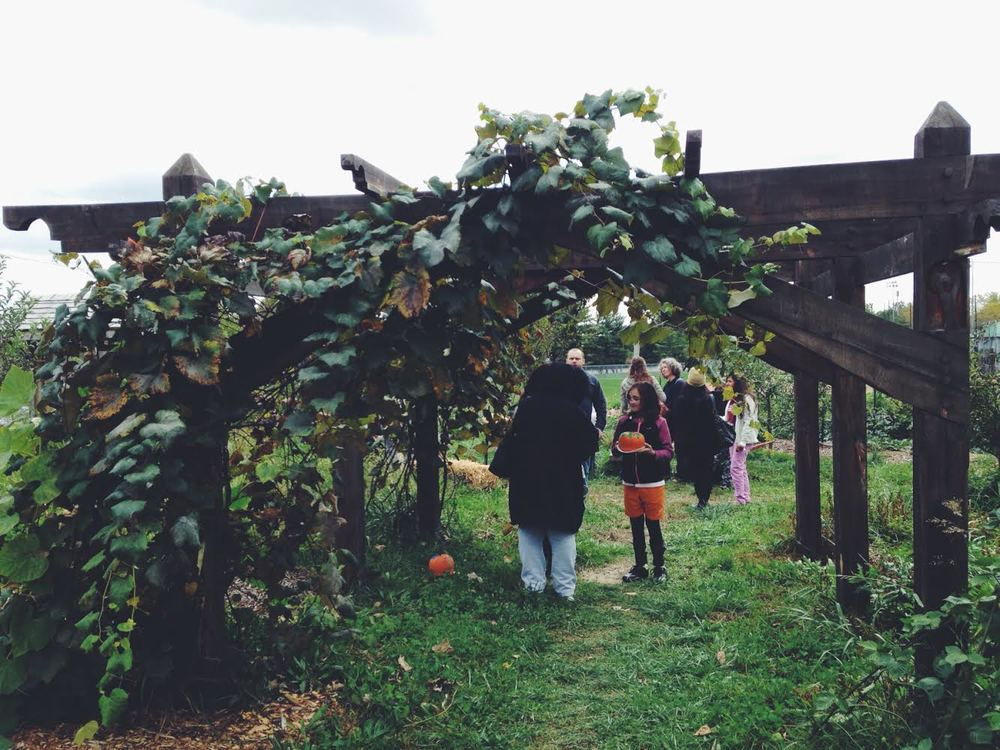 ...and grape pressing with grapes from this arbor.
