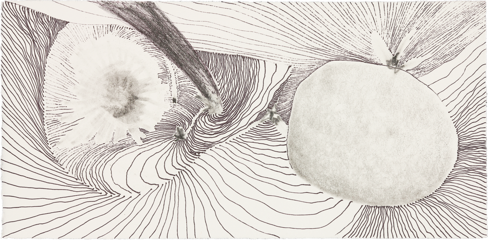 """Metamorphosis   ink and pencil on paper  6"""" x 12"""" 2014"""