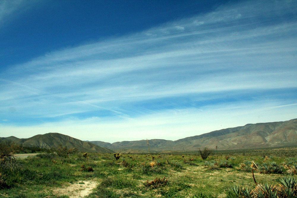 colorado desert in spring