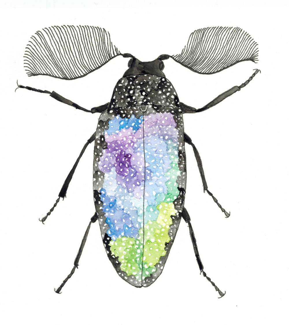Galaxy Beetle