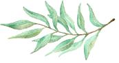 olive branch copy.png