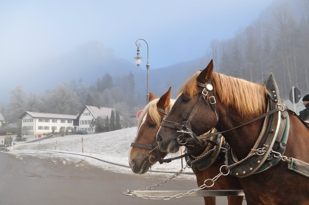 A Bavarian Carriage Ride