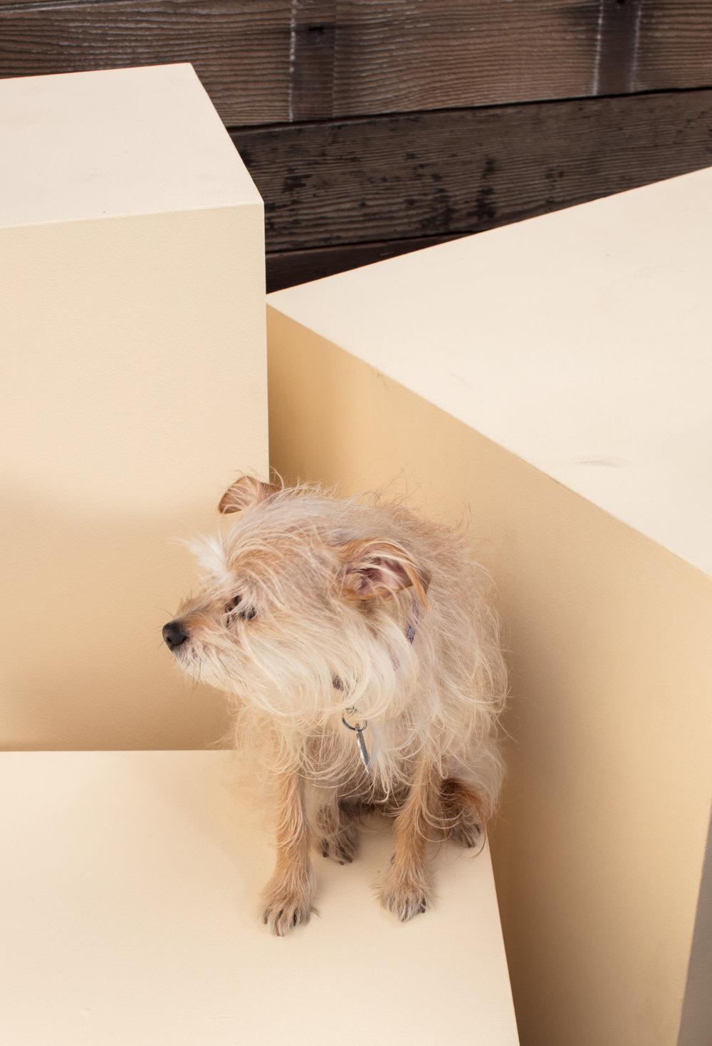 dogdays-5825.jpg