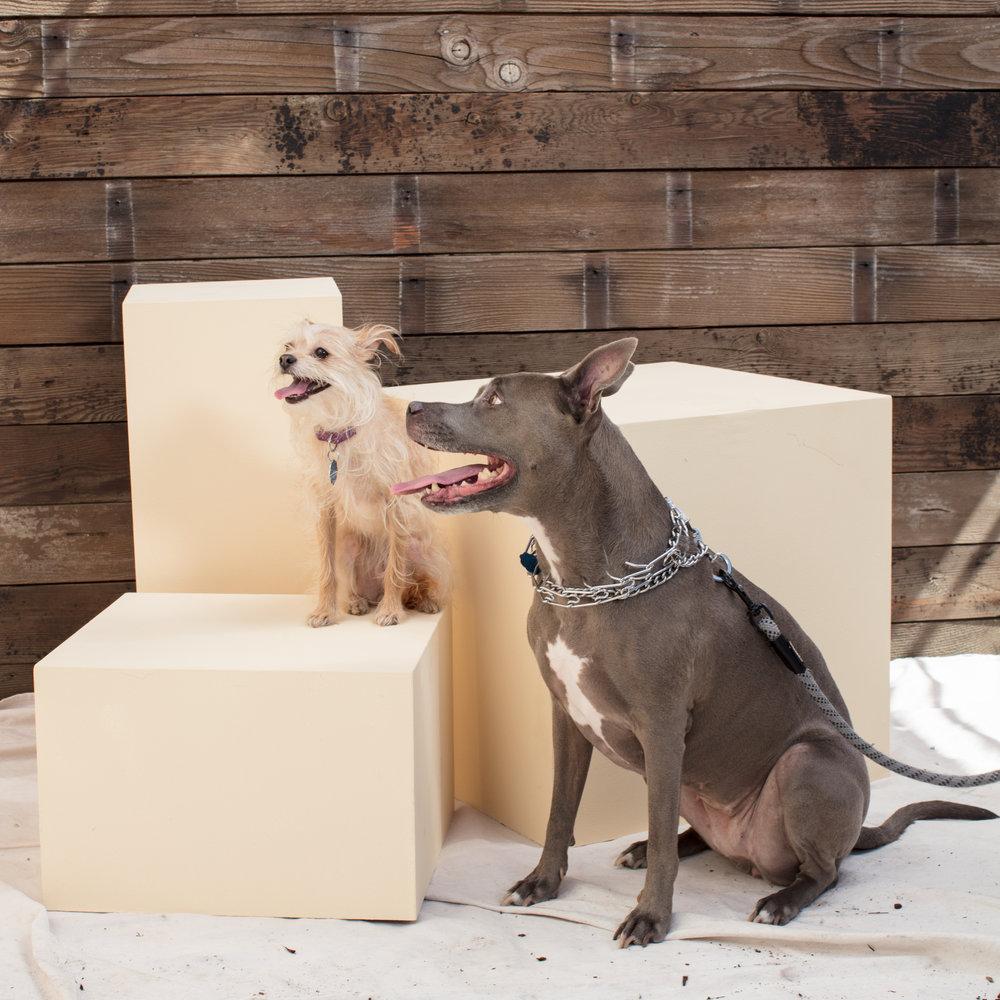 dogdays-5828.jpg