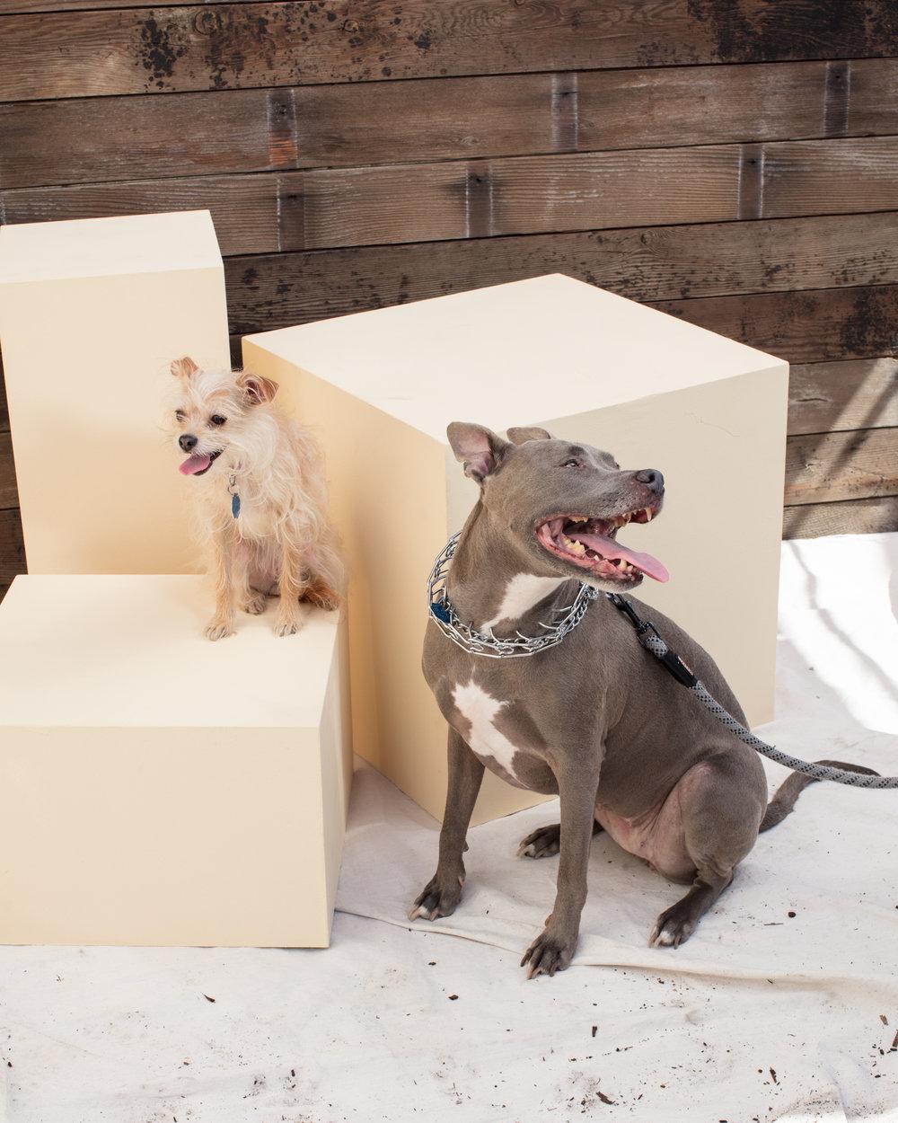 dogdays-5837.jpg