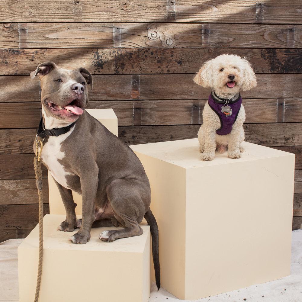 dogdays-5914.jpg