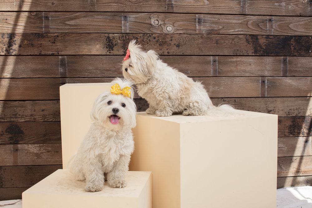 dogdays-5979.jpg