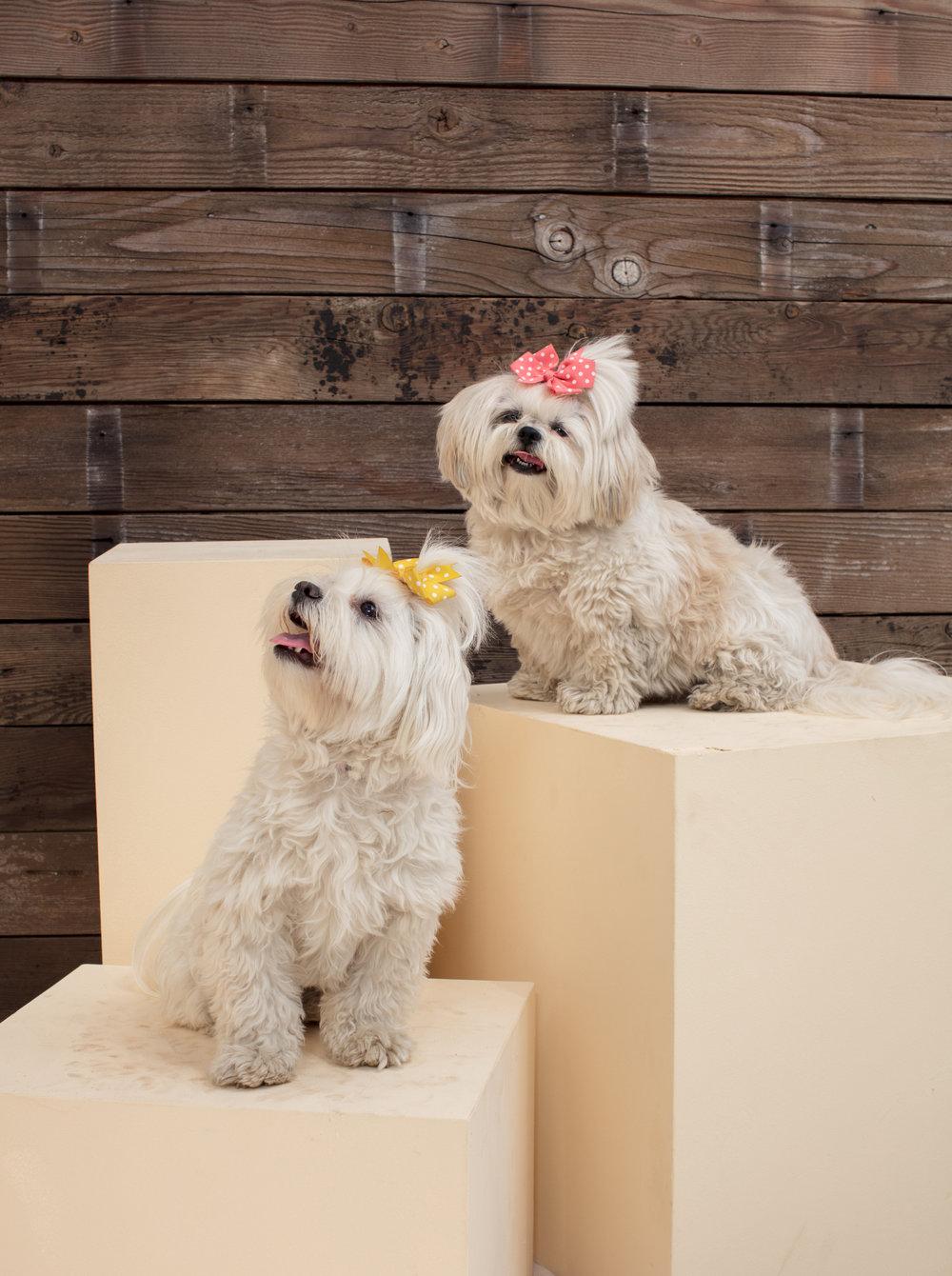 dogdays-5988.jpg