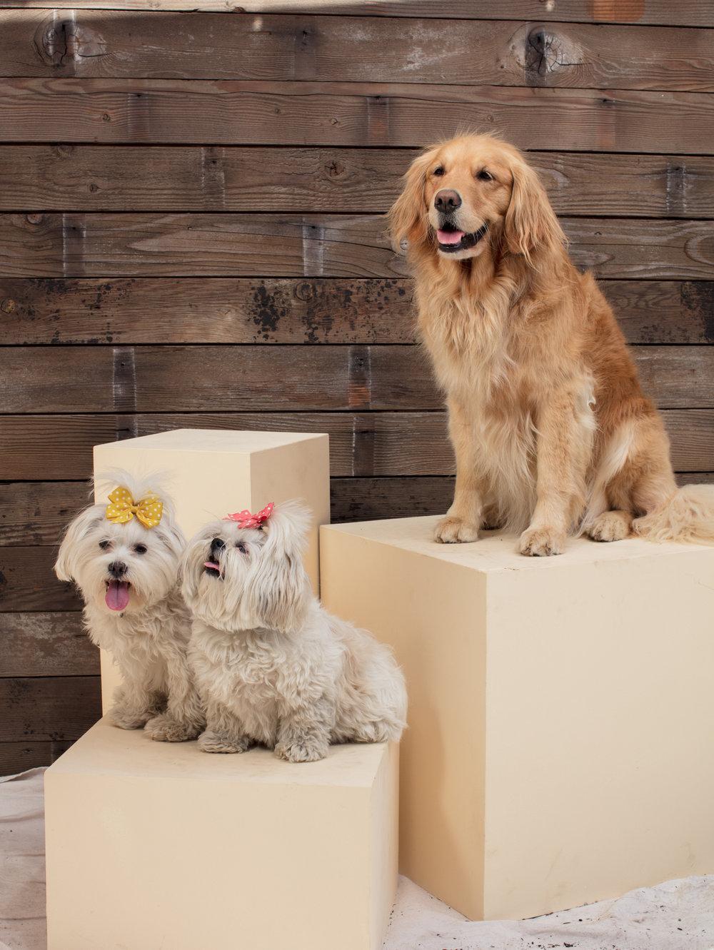 dogdays-6165.jpg