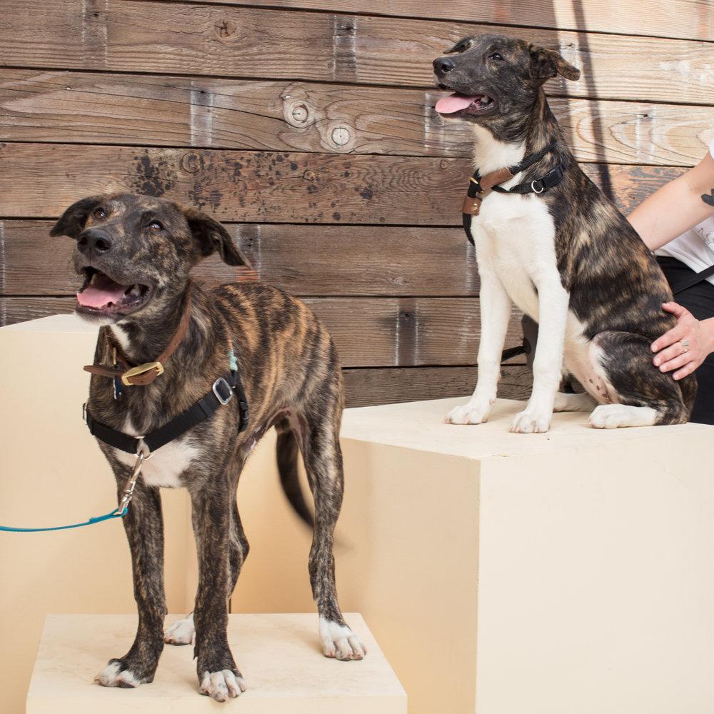 dogdays-6248.jpg