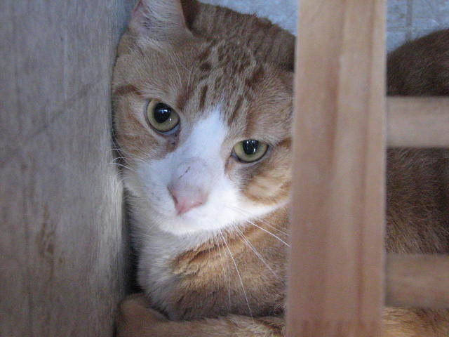 Cat Photo 3.jpg
